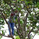 Windu in the tree