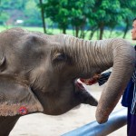 Ele and her Mahout